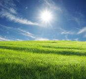 Field and sun Stock Photography