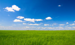 Field  and sun Royalty Free Stock Photography