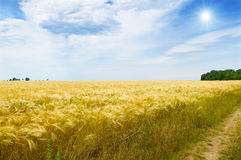 field, sun and blue sky Royalty Free Stock Photography