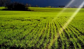 Field with sun rays. Green field with glowing sun rays Stock Photos
