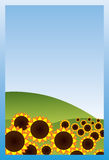 Field of sunflowers. On a background of blue sky Stock Photography