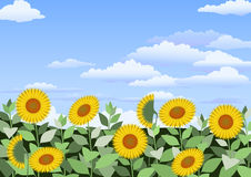 Field of sunflowers. With clouds in the sky Stock Photography