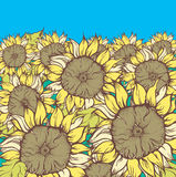 Field of sunflowers. Hand drawn illustration of field of sunflowers Royalty Free Stock Image