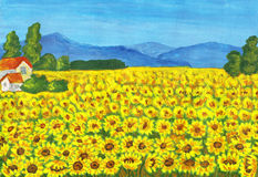 Field with sunflowers. Hand painted picture, acrylic Royalty Free Stock Photos