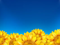 Field of sunflowers and blue sky. EPS 10 Stock Photography
