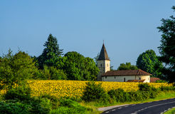 Field of sunflowers and church in France. Royalty Free Stock Image