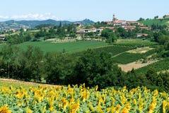 Field of sunflowers of Monterrato on Piedmont Stock Photography