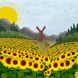 Field of sunflowers near the mill and houses. Sunflowers and a mill Royalty Free Stock Photo