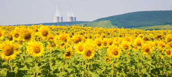 Field of sunflowers and nuclear power plant Stock Photos
