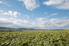 Field of sunflowers and sky and mast Royalty Free Stock Image