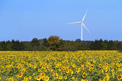 Field of Sunflowers and Wind Turbine Royalty Free Stock Photography