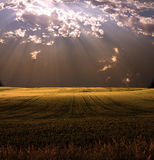 Field in sunlight Royalty Free Stock Photos