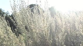 The Field in Sunlight. stock footage