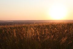Field in sunlight rays Royalty Free Stock Photography