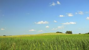 Field in the sunny day Royalty Free Stock Photo