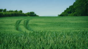 Field On Sunny Day stock footage