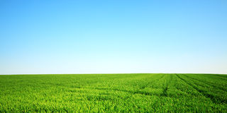 Field on a sunny spring day Royalty Free Stock Image