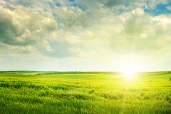 field and sunrise Stock Photos