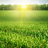 field and sunrise on blue sky Stock Image