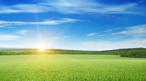 Field, sunrise and blue sky Royalty Free Stock Photos