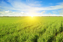 Field, sunrise and blue sky Stock Image