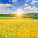 Field, sunrise and blue sky Royalty Free Stock Image