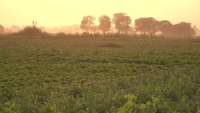 The field at sunrise in Mandalay, Myanmar.  stock video