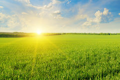 Field, sunrise and  sky Royalty Free Stock Images