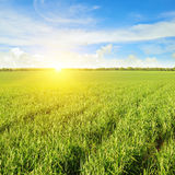 Field, sunrise and  sky Royalty Free Stock Photography