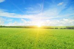 Field, sunrise and sky Royalty Free Stock Photo