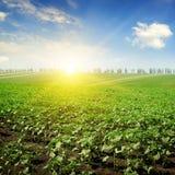 Field  and sunrise Stock Photo