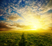 Field and sunset Stock Photography