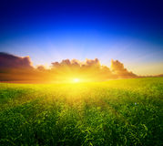 Field  and sunset Royalty Free Stock Photography