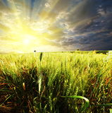Field on sunset Royalty Free Stock Images