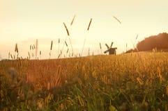 Field on sunset. Photo of the field on sunset Stock Photos