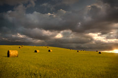 Field at sunset Stock Image
