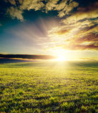Field on sunset Royalty Free Stock Photography