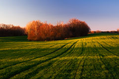 Field at sunset. Royalty Free Stock Image