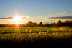 Field in sunset. Photo taken in Finland royalty free stock photos