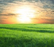 Field on sunset Stock Photography