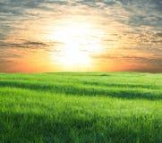 Field on sunset Stock Photography