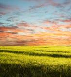 Field on sunset Royalty Free Stock Photos