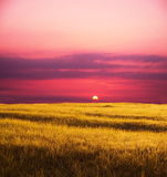 Field on sunset Royalty Free Stock Photos