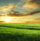 Field on sunset Royalty Free Stock Photo