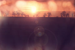 Field on sunset Royalty Free Stock Photo