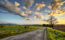Between field. Sunset on a country road between fields Royalty Free Stock Photo