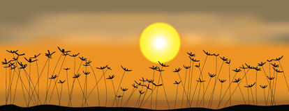 Field and sunset. Field of grass and sunset Royalty Free Stock Images