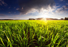 Field sunset Stock Images