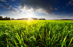Field sunset Stock Photography