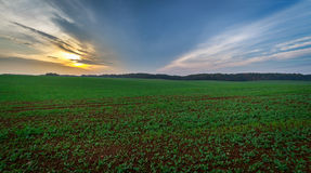 Field during sunset panorama Stock Photo